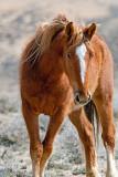 Mustangs: 2011