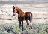 Mustangs 2011 #2