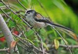 Birds in my own garden. 24 species.