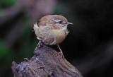 Wildlife on the Alphin Brook Exeter