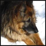 The face of my dog: Tasha