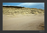 sand, grass, gorse & sky