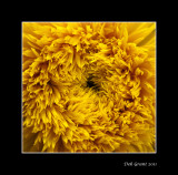 heart of the sun flower