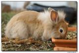 rabbits-12