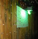 Moth Wall 3 AM 6-6-2010.JPG