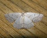 6668 E – Lomographa glomeraria – Gray Spring Moth 5-4-2011 Athol Ma.JPG