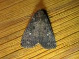 9696 – Condica vecors – Dusky Groundling Moth 5-24-2011Athol Ma .JPG