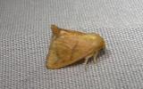 mothball_2011