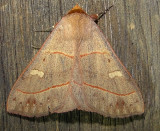 8587– Panopoda rufimargo– Red-lined Panopoda   July 23 2011 Athol Ma (16).JPG