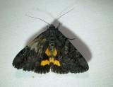 8775– Catocala antinympha– Sweetfern Underwing - July26 2011 Athol Ma (4).JPG