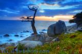 Ghost Tree Sundown