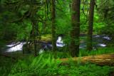 Silver Falls Creek