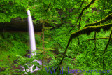Silver Falls Wilderness