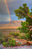 Red Rock Rainbow