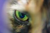 v-eye