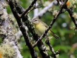Birdtrip to Azores Sept/Oct 2011
