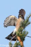 Bonney Butte Hawkwatch Fall 2011