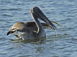 Juvenile with Fish