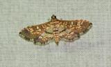 Assembly Moth (5150)