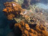 Underwater scenic view