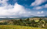 pine_ridge_forest_reserve
