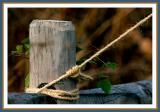 fence post with twine