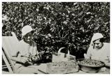 Allinge 1935