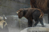 April 22, 2009: Antwerpen Zoo (B)