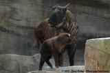 BEL: Antwerpen - Antwerpen Zoo