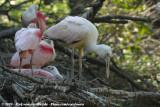 August 23, 2009: Vogelpark Avifauna (NL)
