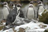 December 30, 2009: Aqua Zoo (NL)