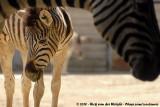 GER: Duisburg - Zoo Duisburg