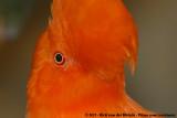 September 18, 2011: Zoo Wuppertal (D)