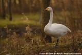 December 30, 2011: Landgoed Hoenderdaell (NL)