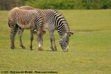 May 18, 2012: Safaripark Beekse Bergen (NL)
