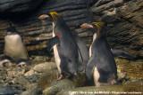 June 24, 2012: Antwerpen Zoo (B)