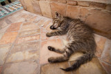 Relaxing cat at The Saadian Tombs