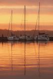 Morgan Shores Yacht Club
