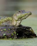 Louisiana Wildlife 2011