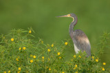 Louisiana Wildlife  2007 & 2006