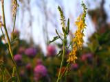 Morning weeds
