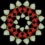 Kaleidoscopic Picture Creations *