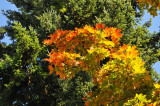 Chemainus Fall Colours