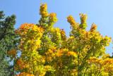 Chemainus Fall Colours Skylined