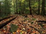 wCatoctin Creek12 .jpg
