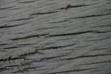 Bench Timber