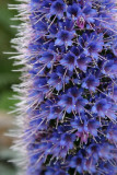 Blue Flower Tower