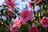Wisley Flowers