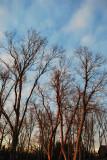 Berea Woods / Miller Welch - January 30, 2012
