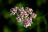 Flowers - Blossoms - Plants